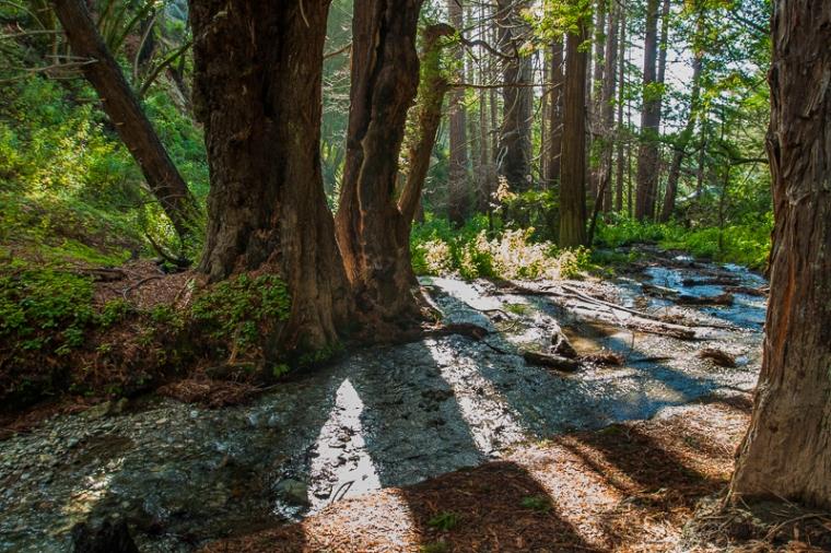 big-sur-trees-julie-boyd-photo