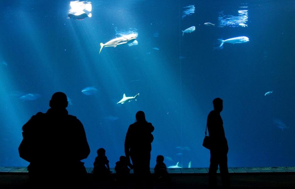 Monterey Bay Aquarium 1