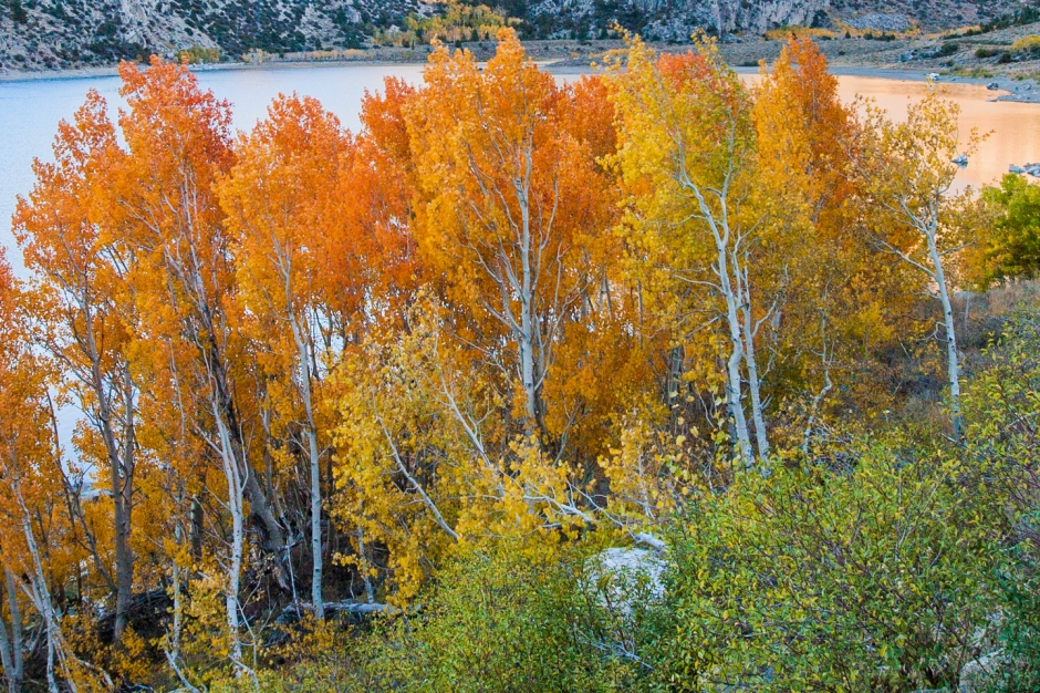 sierras-fall-colors-quaking-aspens
