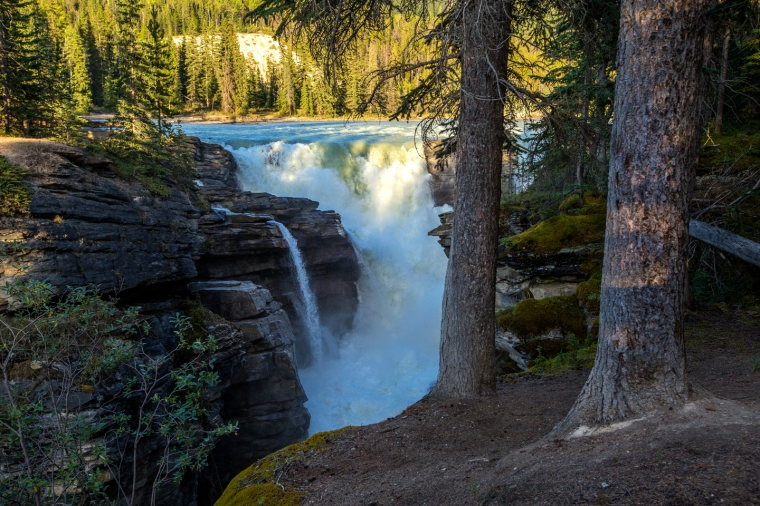athabasca-falls-trees