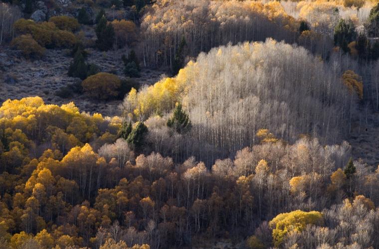 eastern-sierras-fall-colors-aspens-details