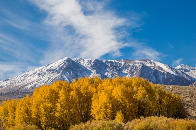eastern-sierras-fall-colors-aspens