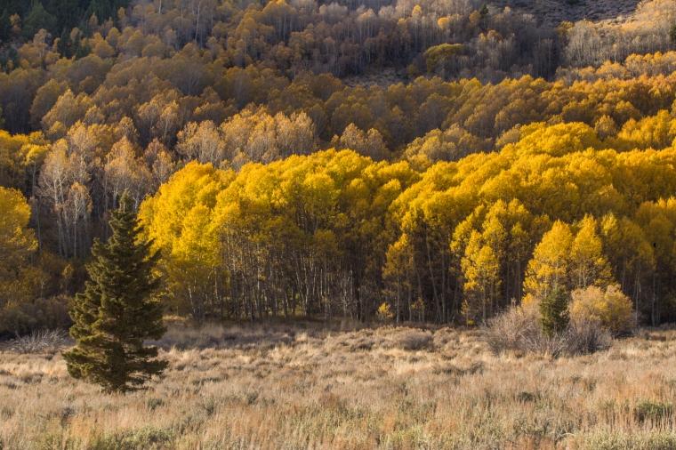 eastern-sierras-fall-colors-june-lake-lighting