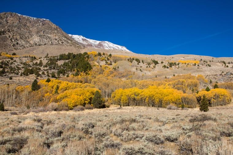 eastern-sierras-fall-colors-june-lake