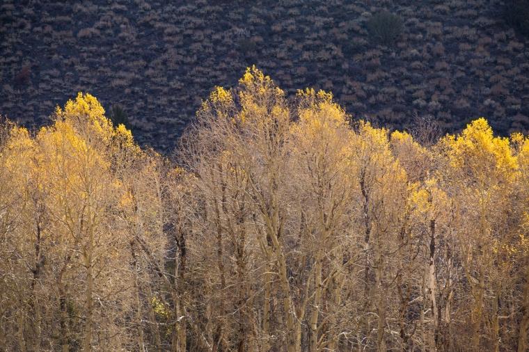 june-lake-loop-aspens-gold