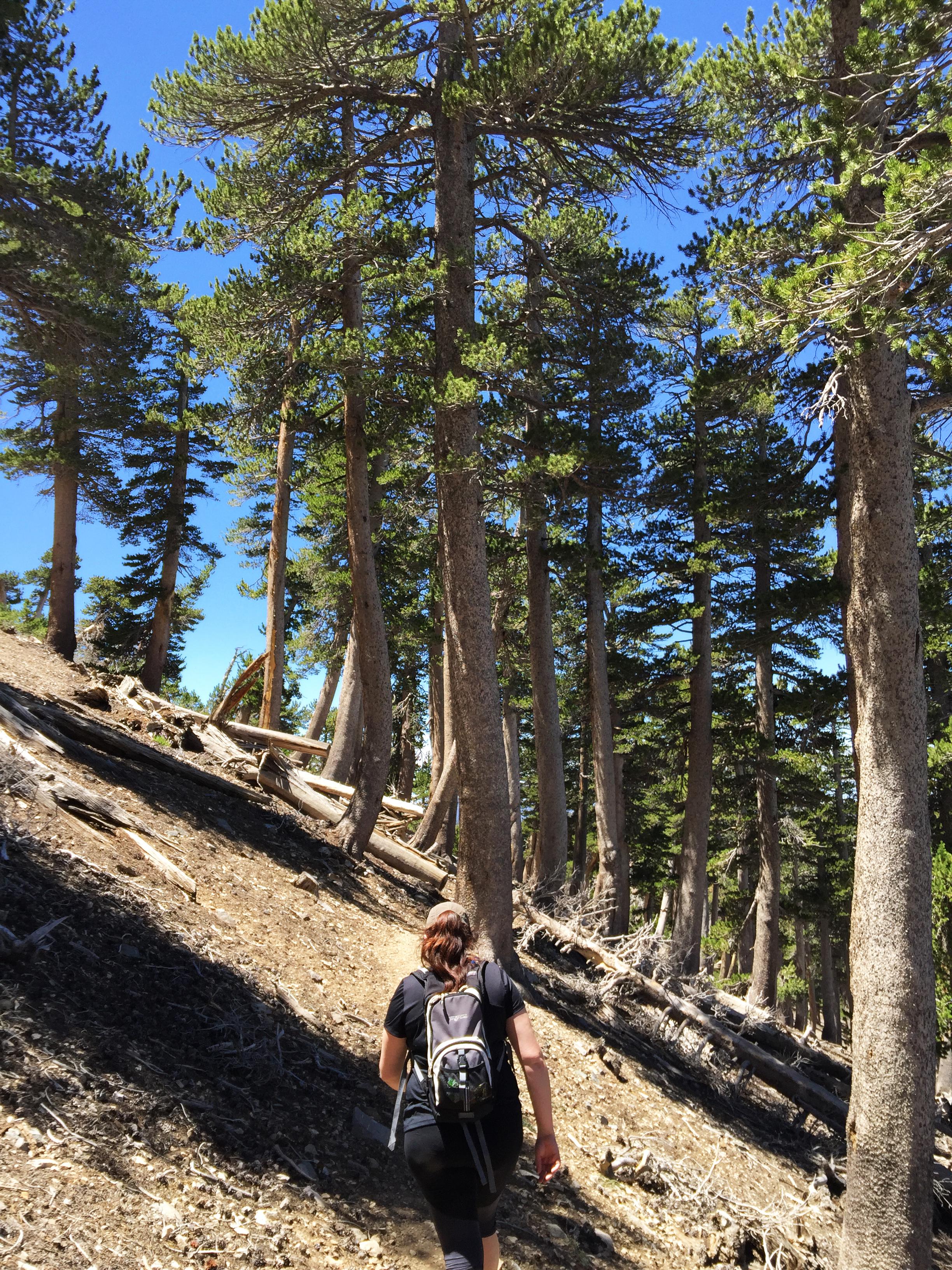 mount-baden-powell-hike