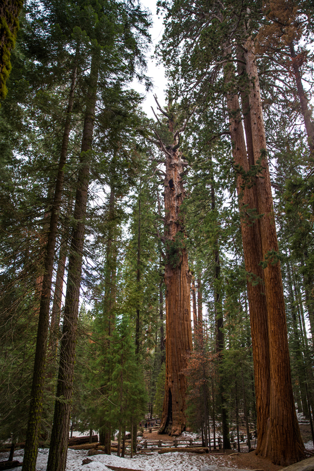 Sequoia-National-Park-General-Sherman-Tree