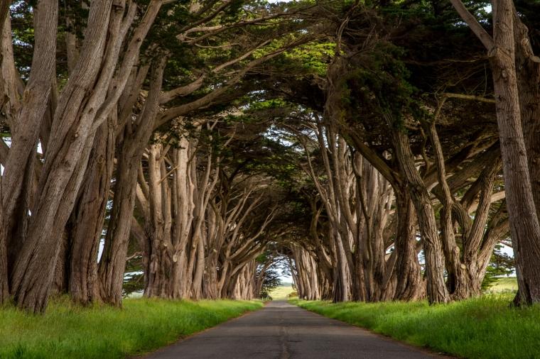 Cypress-Tunnel--Julie-Boyd-Photography